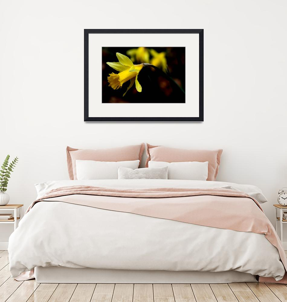 """""""Daffodil""""  (2010) by tennessewood"""