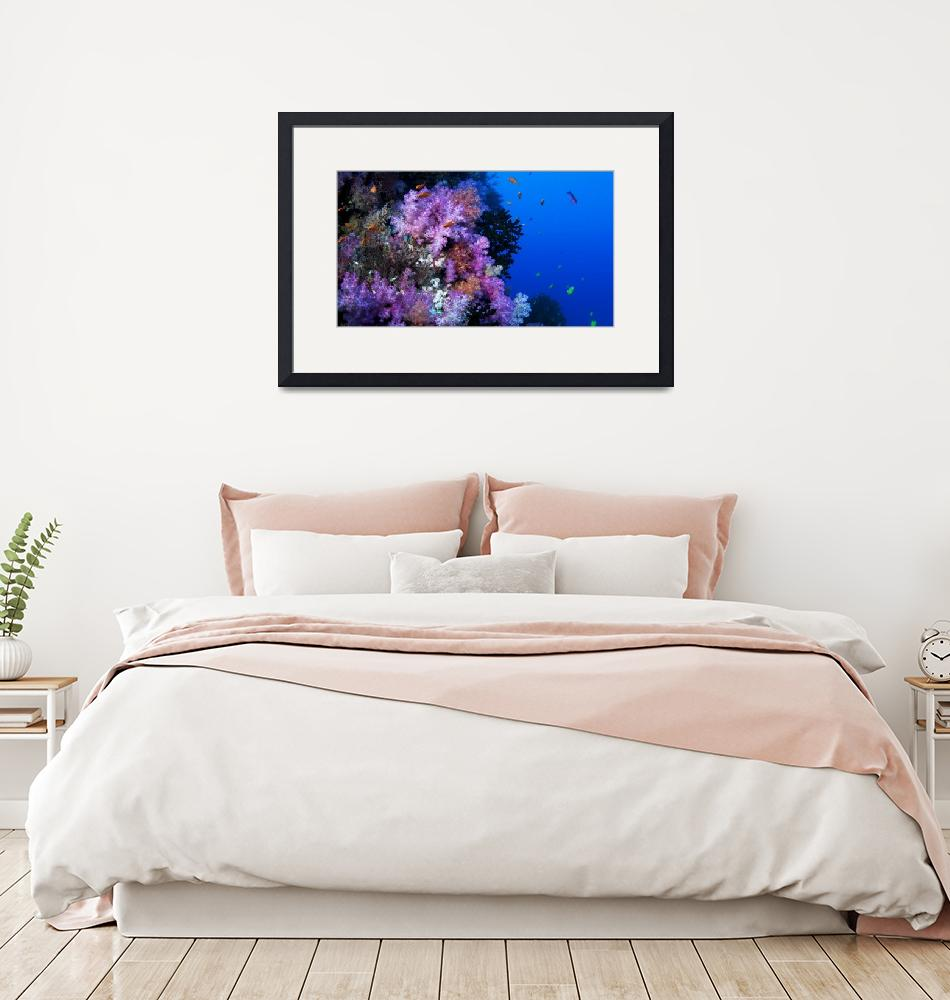 """""""Soft Corals""""  by howardwesleyhall"""
