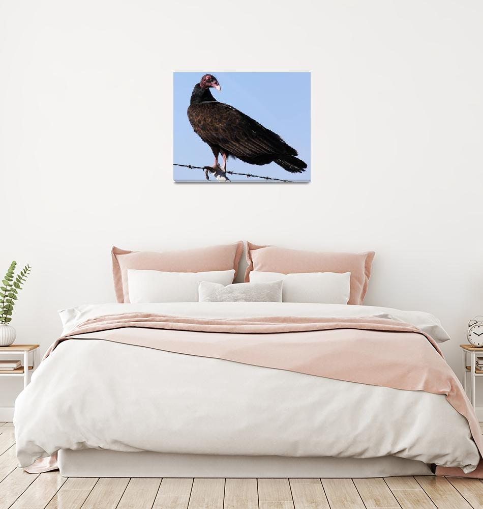 """Turkey Vulture""  by DonBakerPhotography"