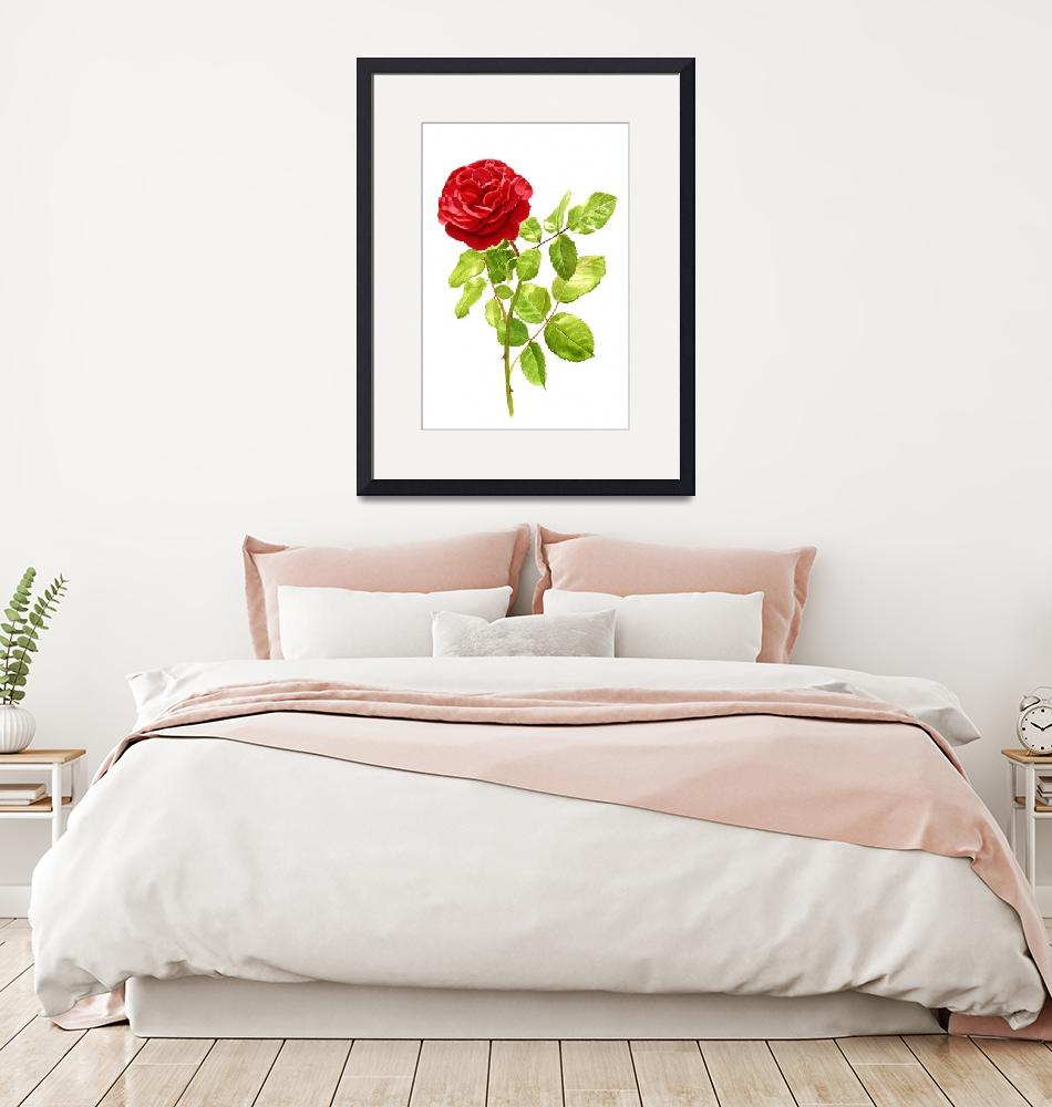 """""""Brilliant Red Rose on a Stem (white background)""""  (2014) by Pacific-NW-Watercolors"""