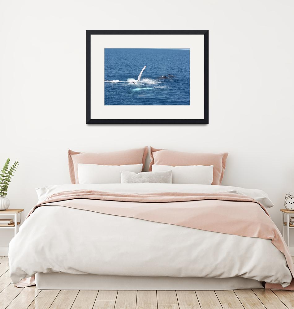 """NaP_ Whale Watching154""  by nevilleprosser"