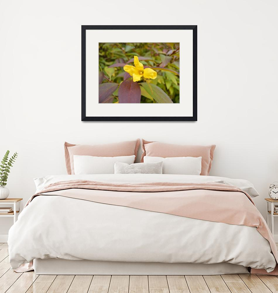 """""""Forsythia in fall""""  by cbrosious"""