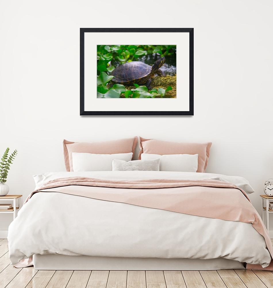 """""""Painted Turtle""""  (2012) by ValeriesGallery"""