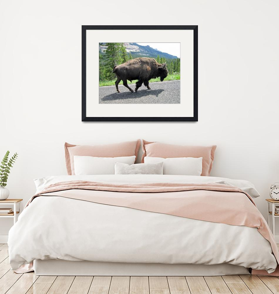 """Bison Stroll""  (2011) by podspics"