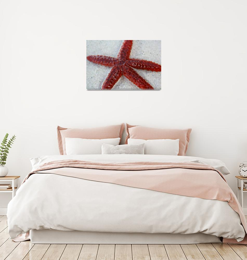 """Surreal Starfish""  (2008) by KPrintsPhotography"