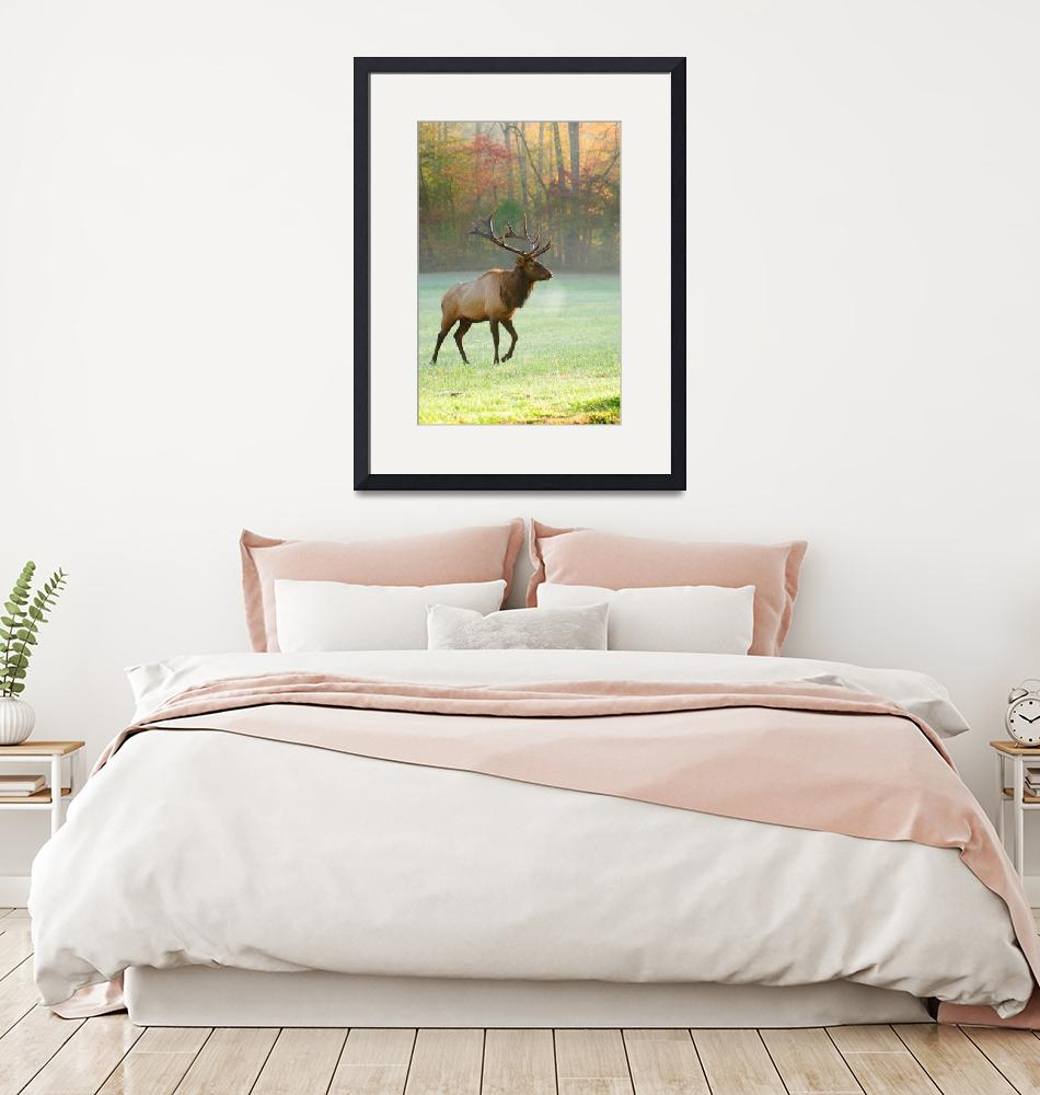 """""""Mr. Elk of the morning""""  by jun"""