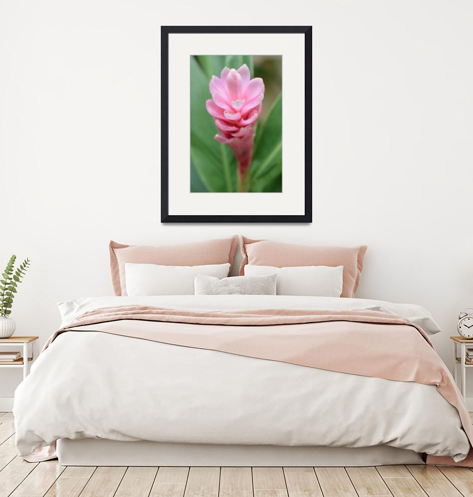 """""""Pink Ginger Lily""""  (2020) by MiniArora"""