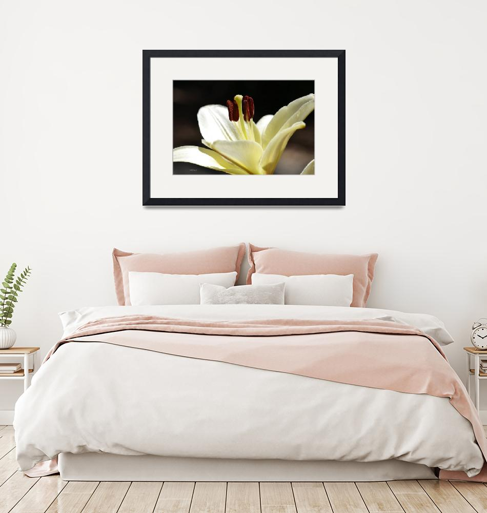 """""""White Regal Lily""""  (2012) by theblueplanet"""