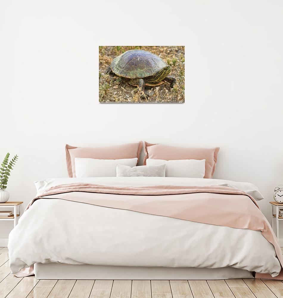 """""""Western Painted Turtle""""  (2011) by lightningman"""