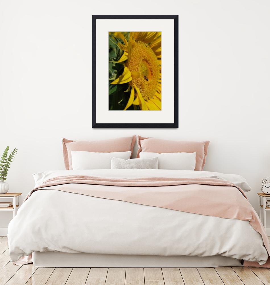 """""""Sunflower and Bee""""  (2009) by starrtwin1"""
