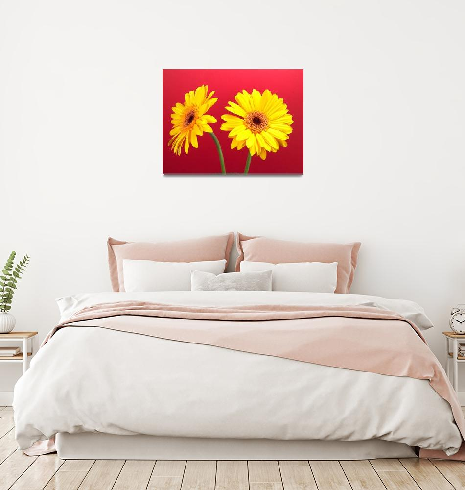 """""""Yellow Gerbera Daisies Delight On Red""""  (2006) by Infomages"""