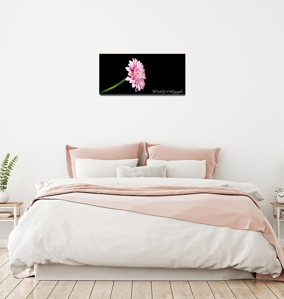 """Flower Pink Blackbackground charp""  by Gie1984"