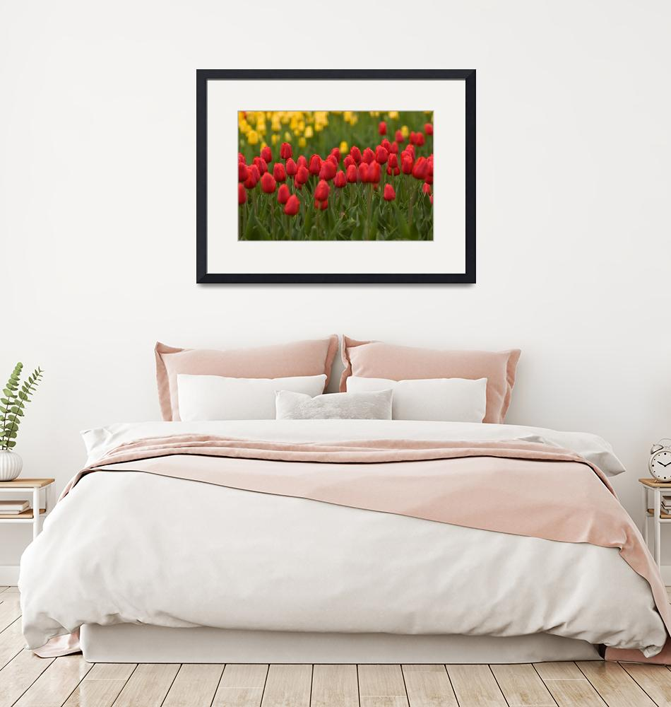 """Red and Yellow Tulips""  (2006) by dennisflood"