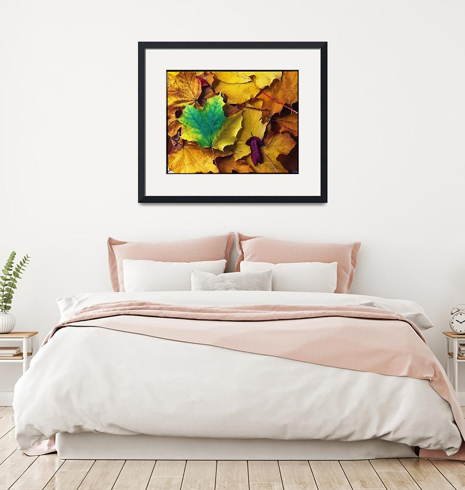 """Autumn Leaves Illustration""  (2009) by BotanicaPhotographicus"