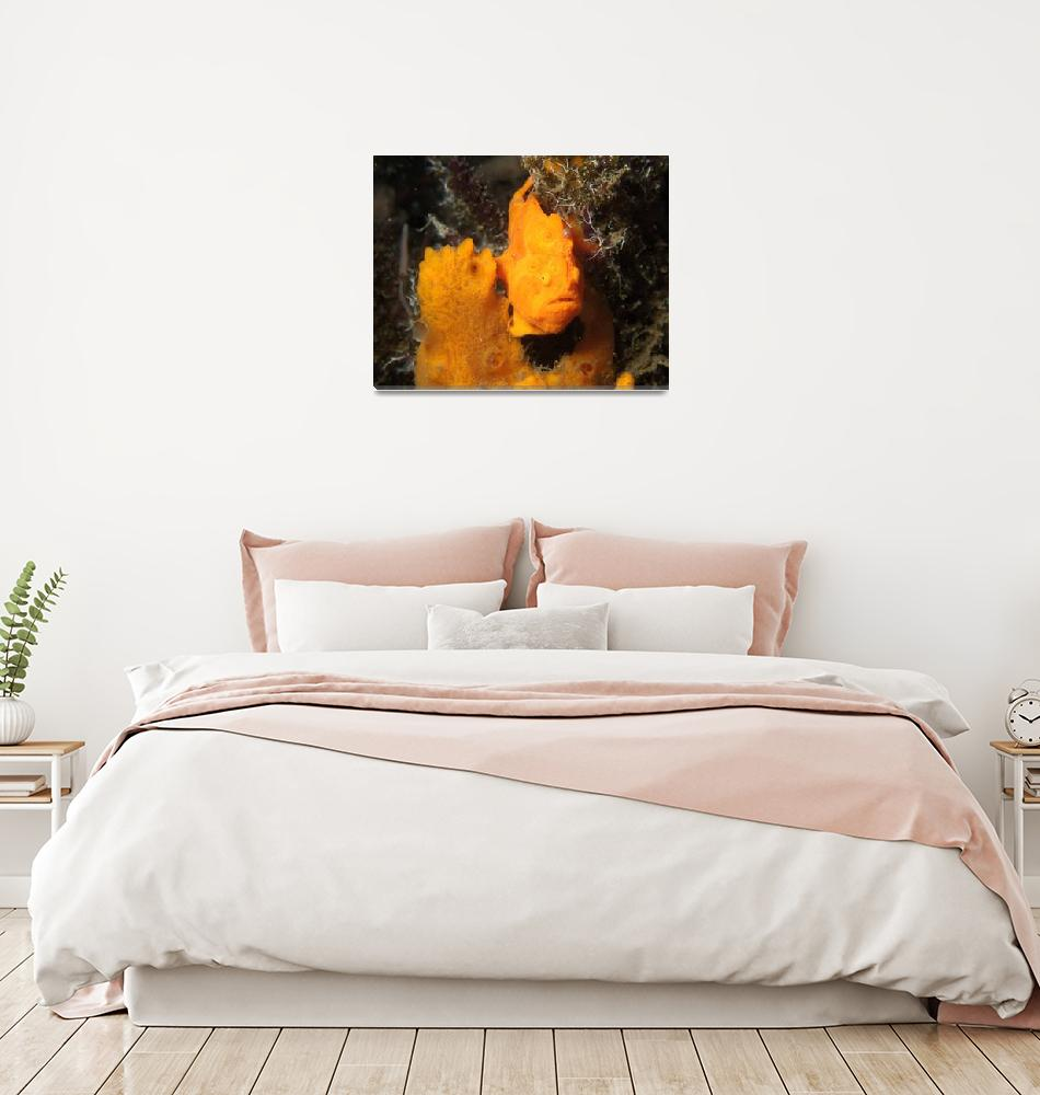 """""""Find the Fish: Orange Frogfish on Sponge""""  (2004) by JoaoPonces"""