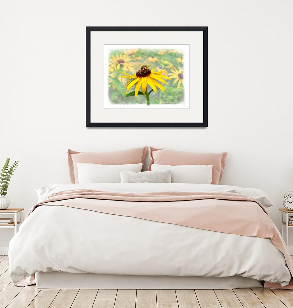 """Bee on Blackeyed Susan""  (2006) by nancielaing"