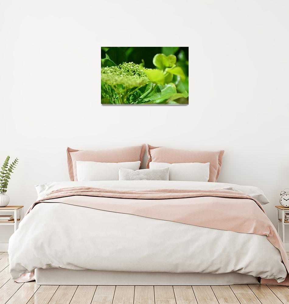 """""""The view of the green flowers""""  (2019) by danieltoryfter"""