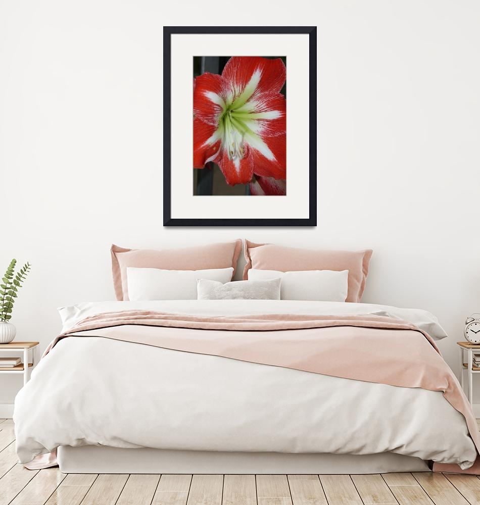 """""""Red Lily""""  (2009) by AlyceTaylor"""
