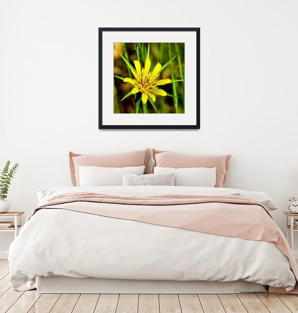 """Arizona Wildflower- Yellow Salsify""  (2009) by rayjacque"