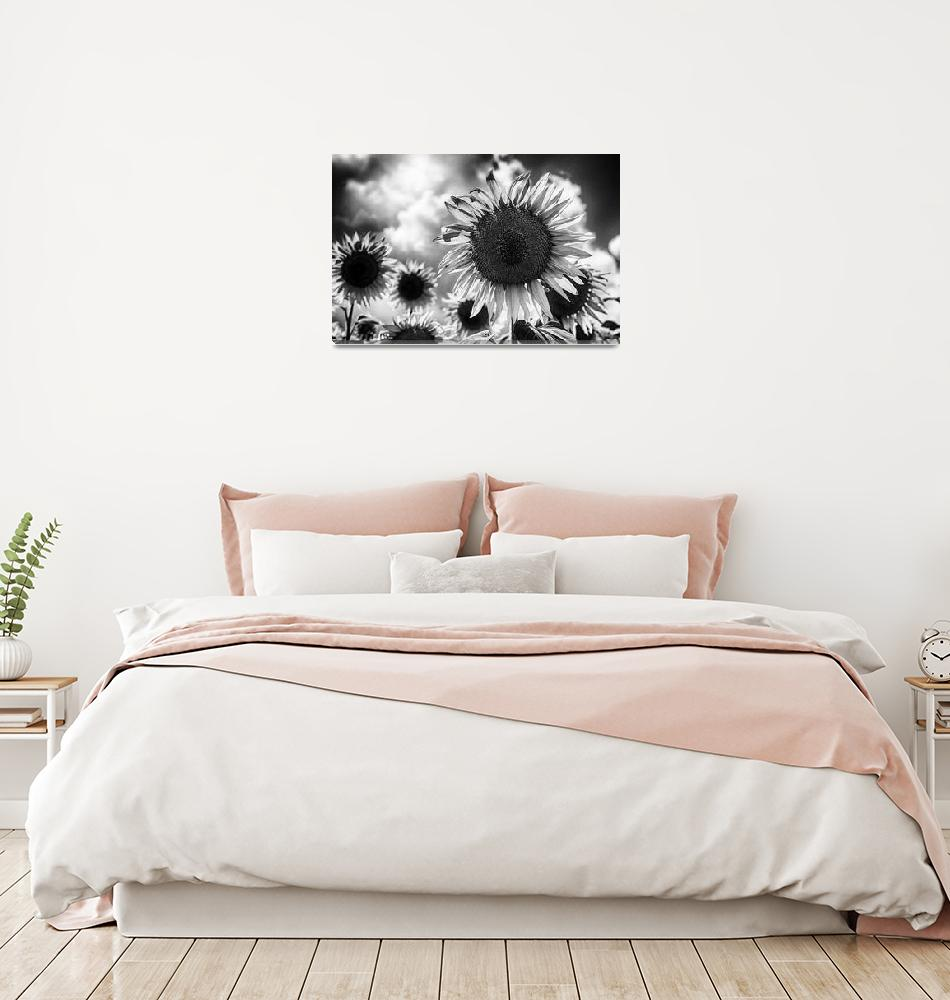 """""""Black and white sunflowers""""  (2011) by motleymenagerie"""