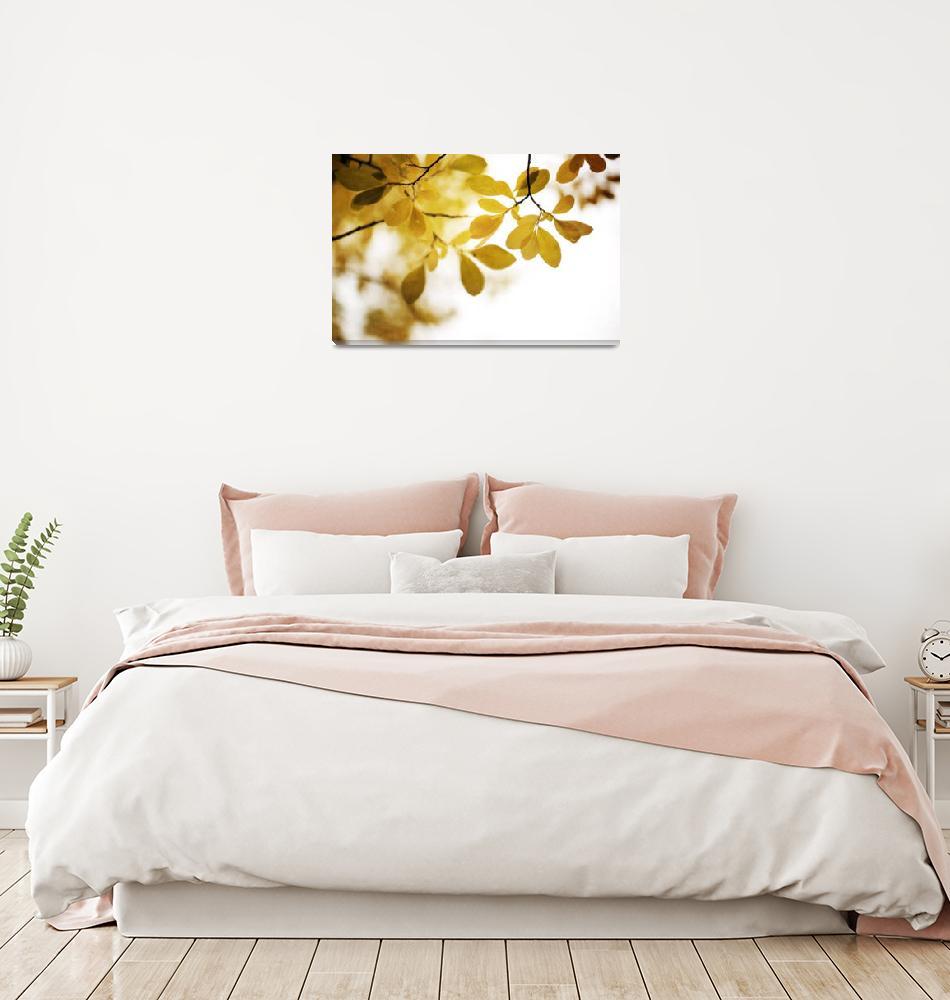 """""""Autumn Gold""""  by Piri"""
