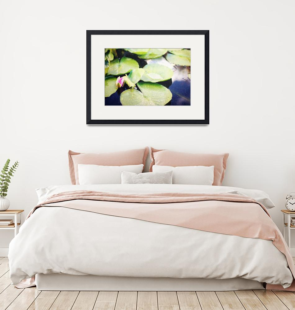"""""""Lily pad""""  (2010) by InspiredLight"""