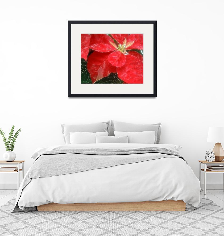 """""""Red Poinsettia""""  by ChristopherInMexico"""