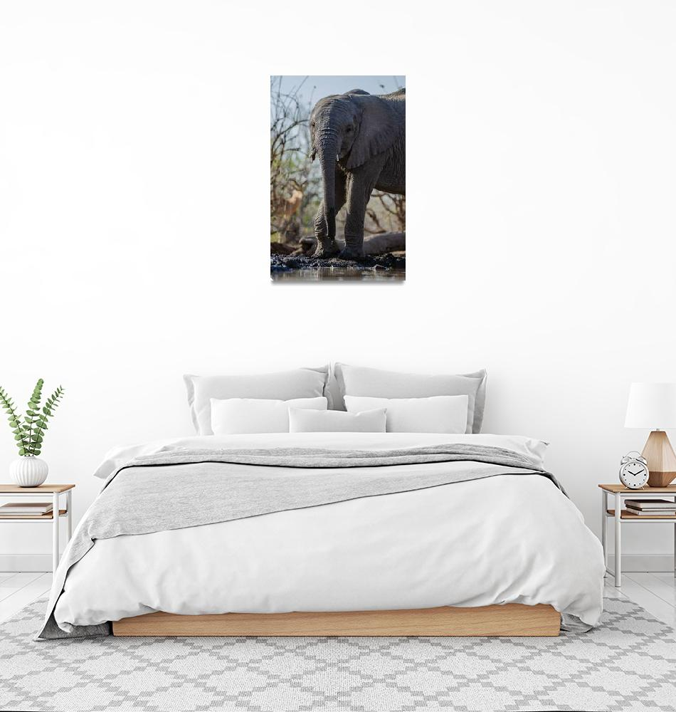 """""""Elephant with Short Tusks by Water Hole""""  (2019) by JPRVenturesLLC"""