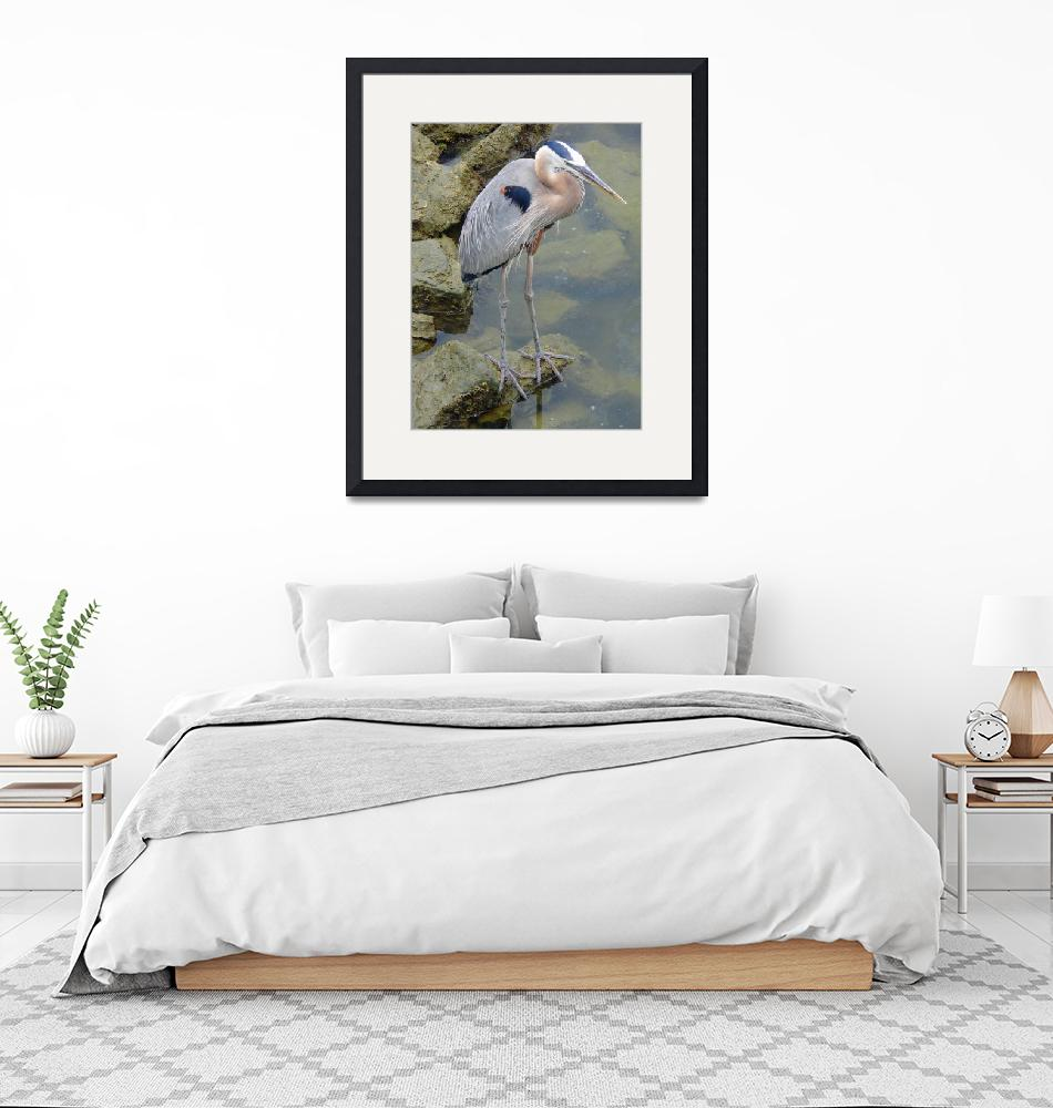 """Great Blue Heron""  (2007) by stockphotos"