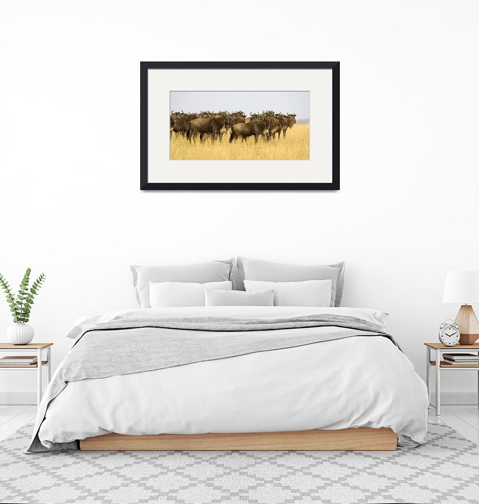 """Wildebeest""  by Panoramic_Images"