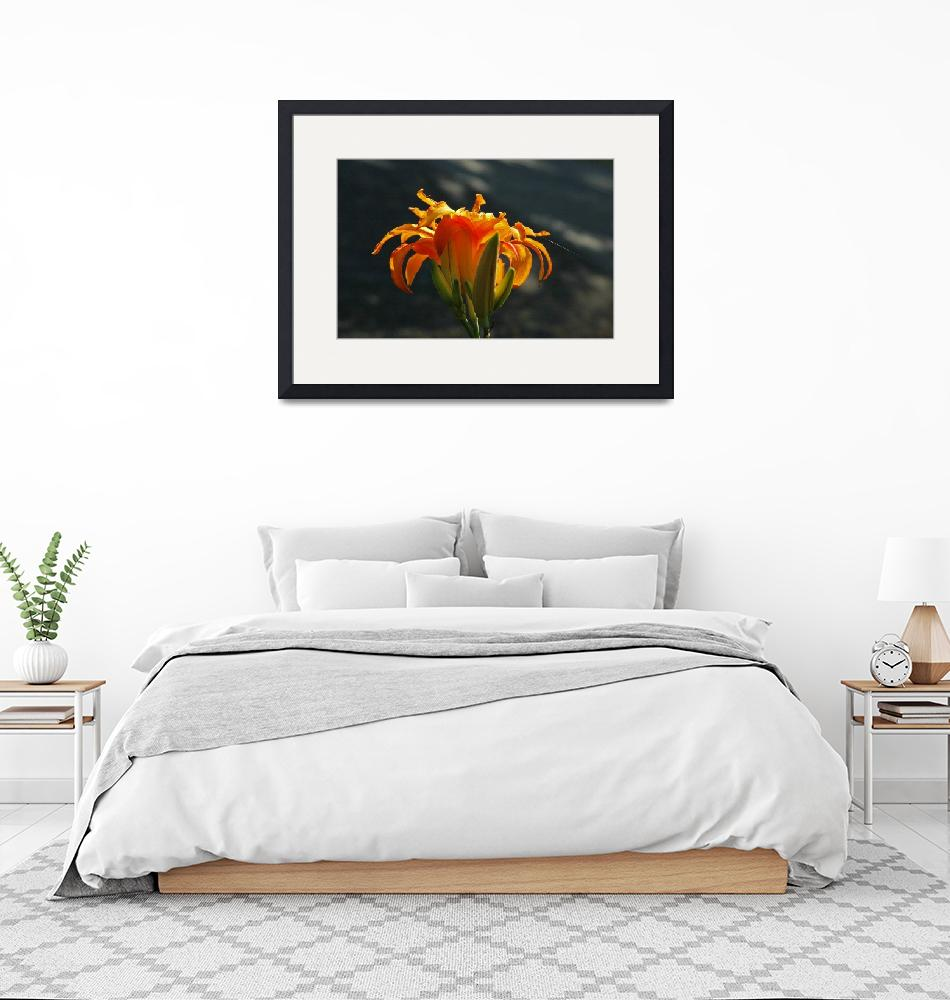 """""""day lily with spider web""""  (2007) by bittersweetcottage"""