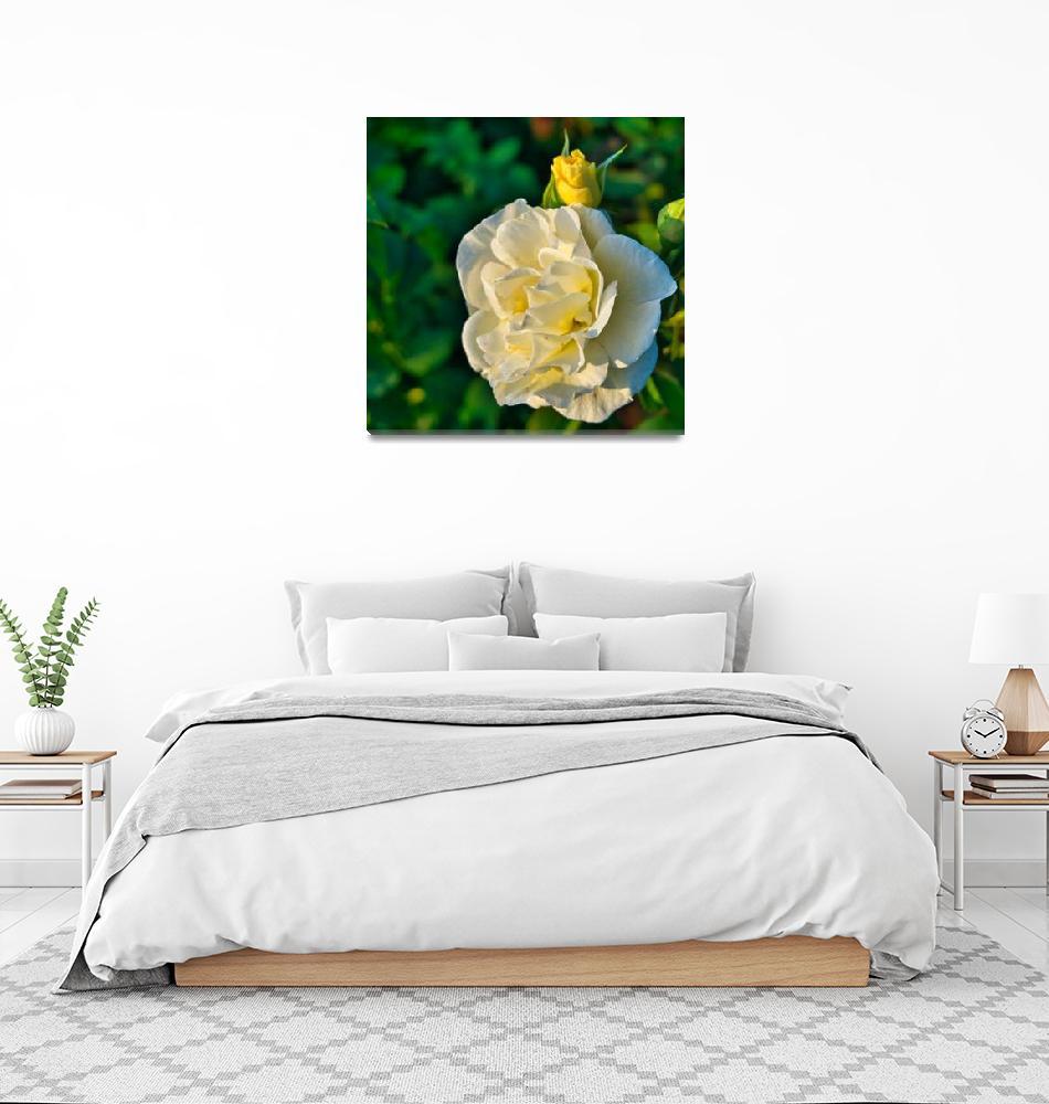 """""""Roses No. 9""""  by RDCushing"""