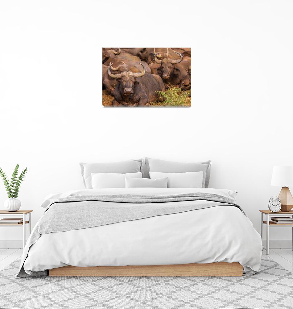 """Cape Buffalo""  (2011) by mjphoto-graphics"