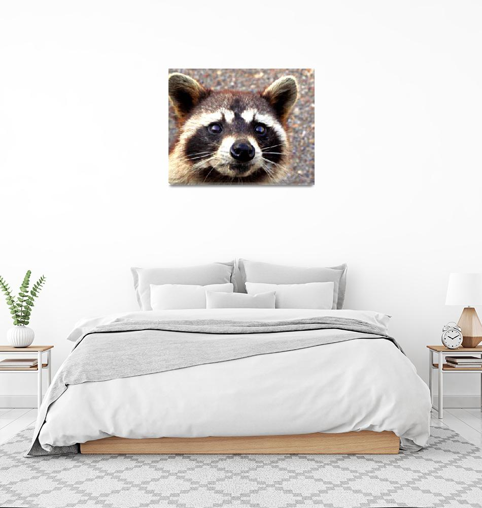 """""""A Raccoon""""  (2012) by bandtdigitaldesigns"""