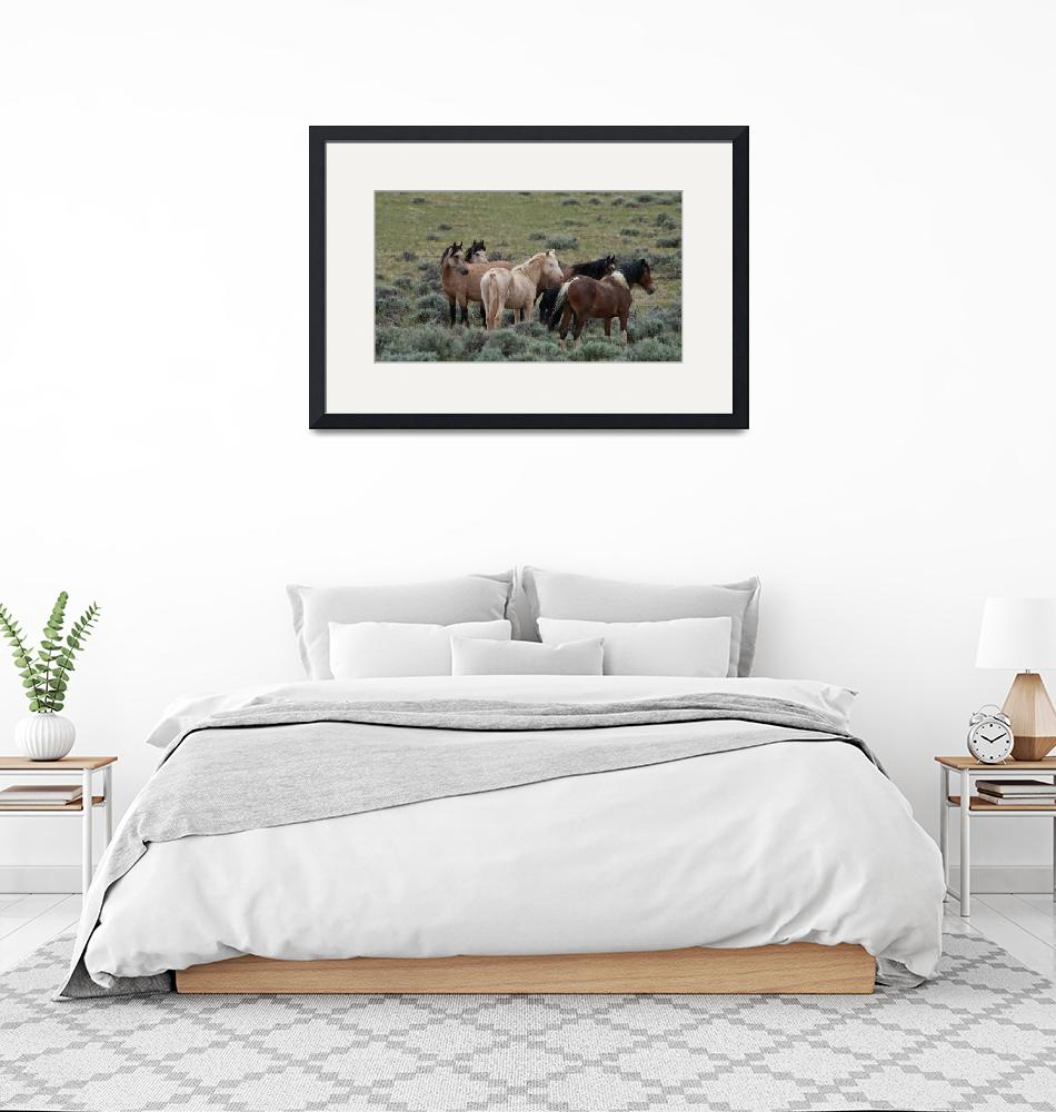 """""""Wild Horses in Wyoming""""  by MBandy"""
