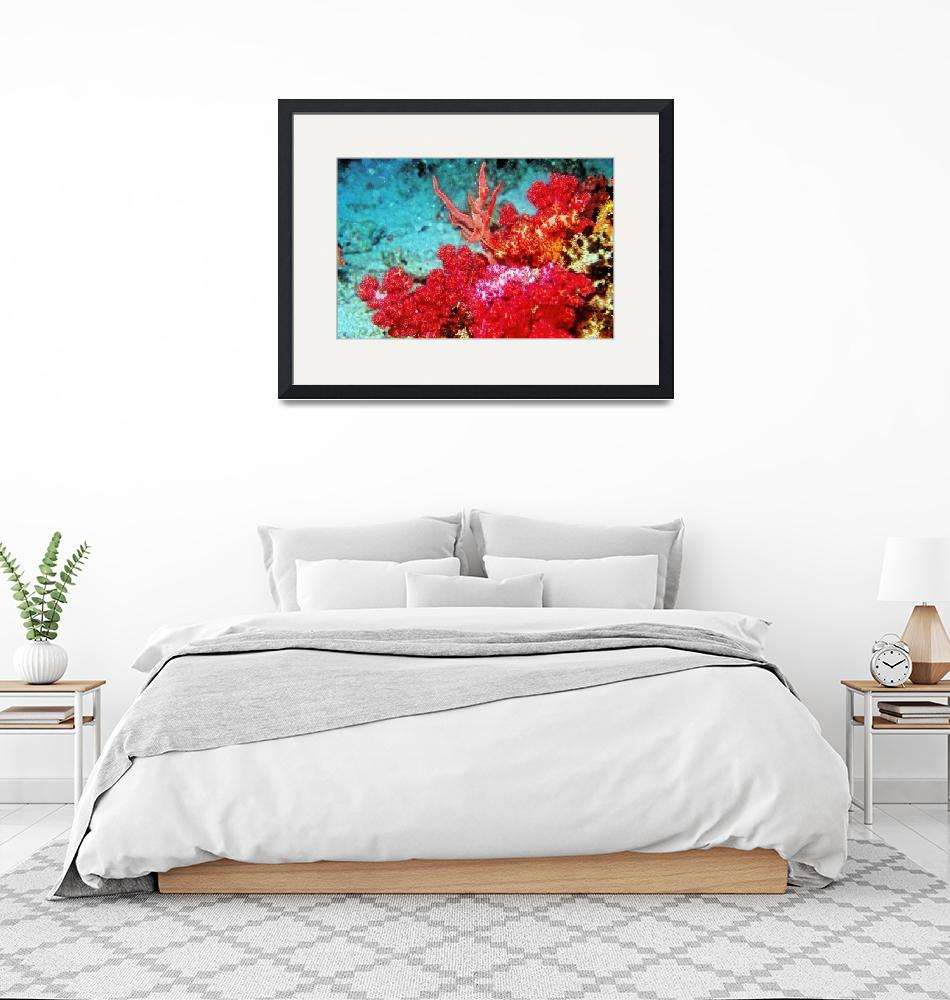 """""""Red Soft Corals""""  (1992) by JoaoPonces"""