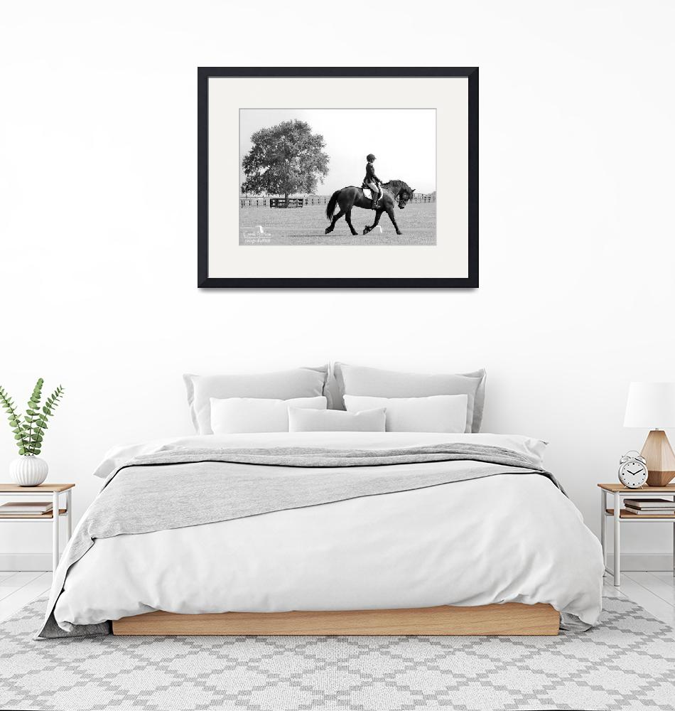 """""""© CBp DRESSAGE""""  (2014) by creekbottomgifts"""