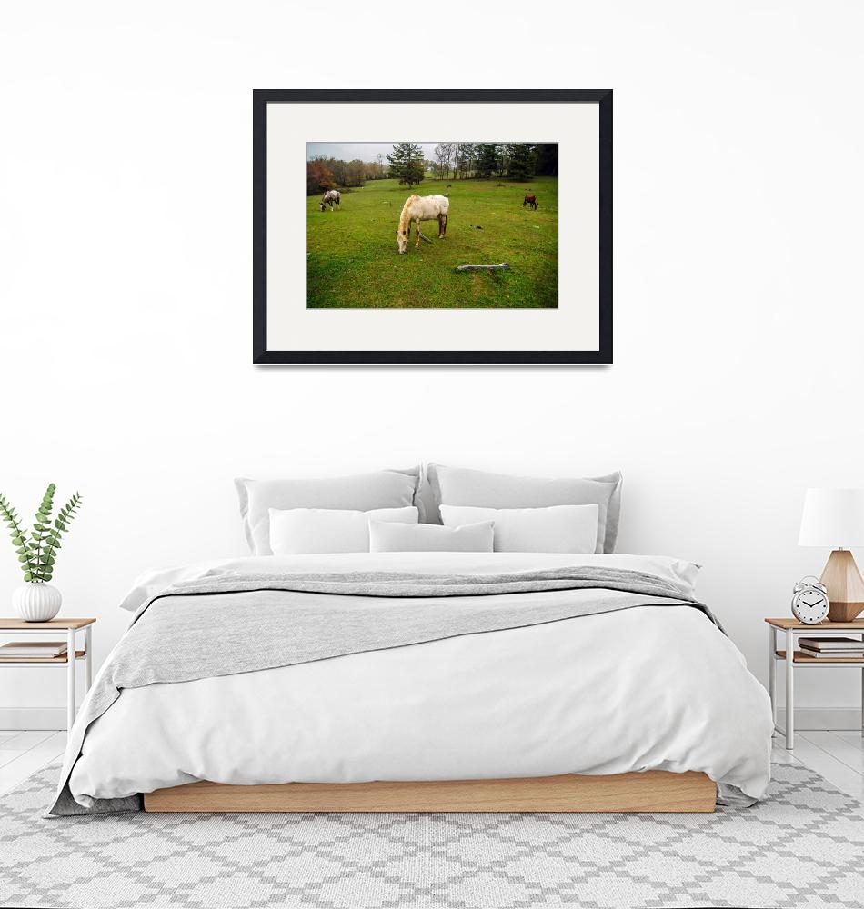 """""""herd of horses pasture in a valley with green hill""""  by digidreamgrafix"""