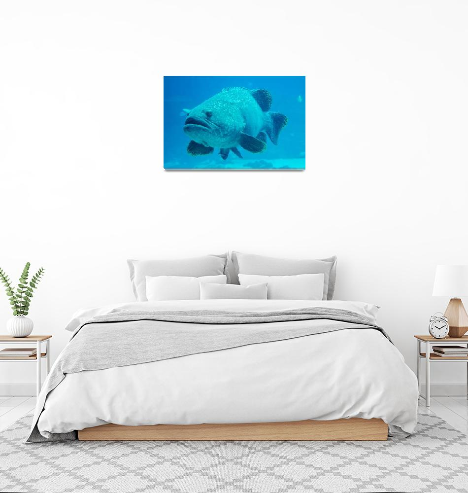 """giant grouper fish looking at diver""  by digidreamgrafix"