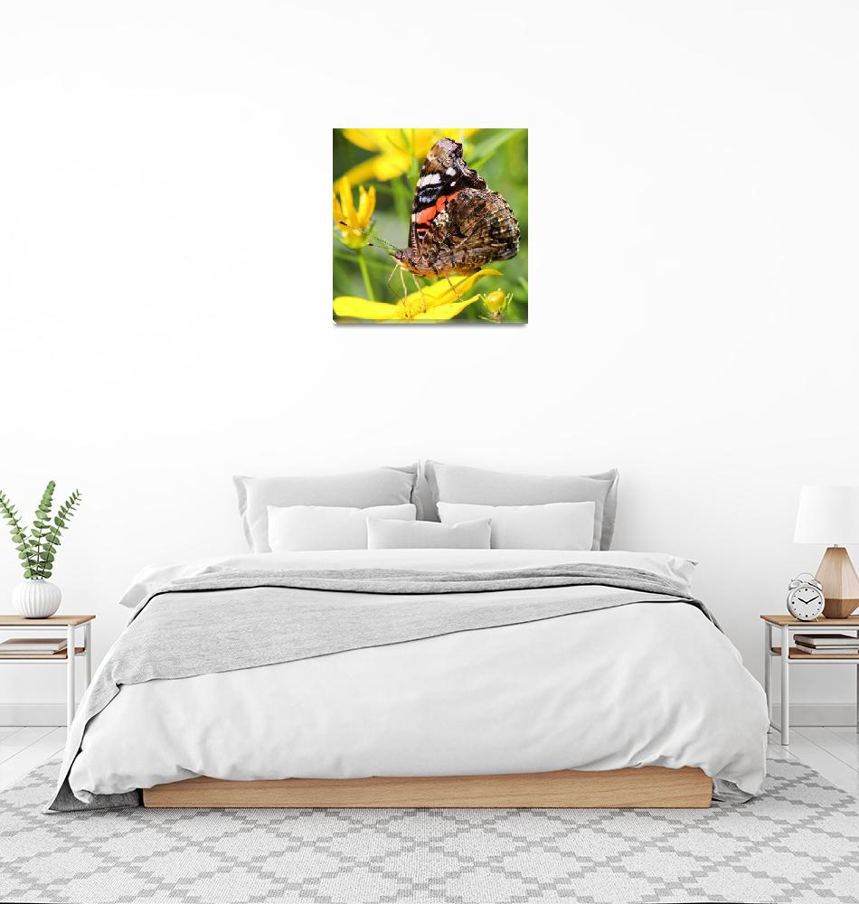 """Red Admiral Butterfly square""  (2014) by KsWorldArt"