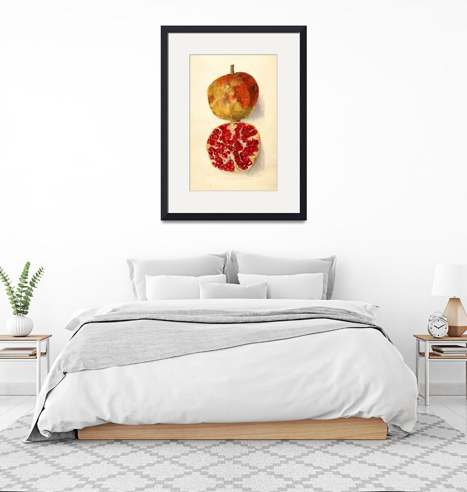 """""""Vintage Illustration of a Pomegranate""""  by Alleycatshirts"""