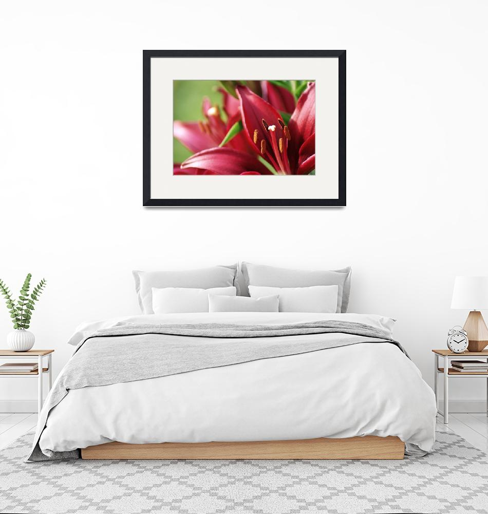 """""""Red Lilies""""  (2012) by tracyjade"""