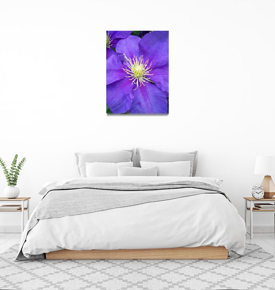"""""""Clematis""""  (2010) by GrayEyes"""
