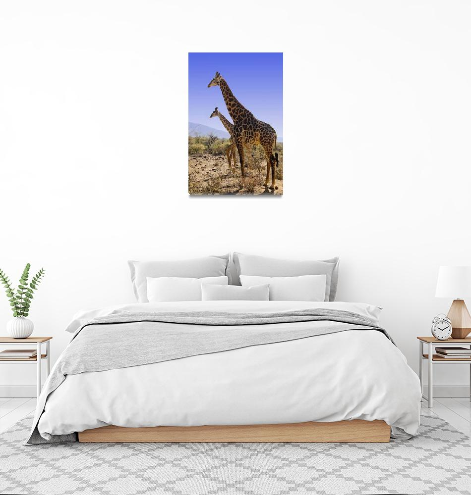 """DSC_0089- Giraffe""  (2007) by photocell"