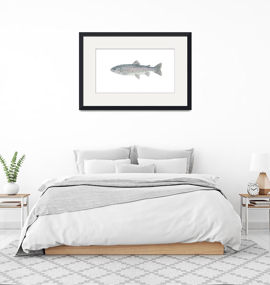 """""""Illustration of a steelhead trout""""  by stocktrekimages"""