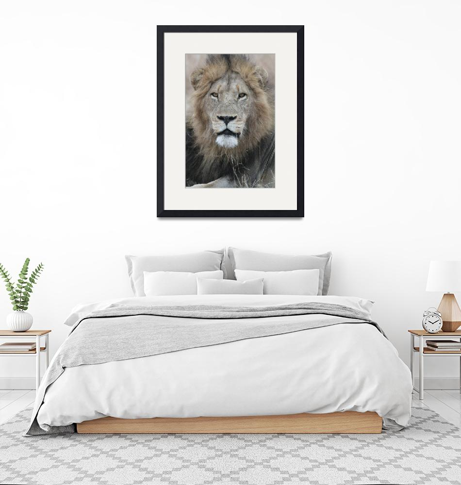 """""""Male Lion""""  by DaniSweet"""