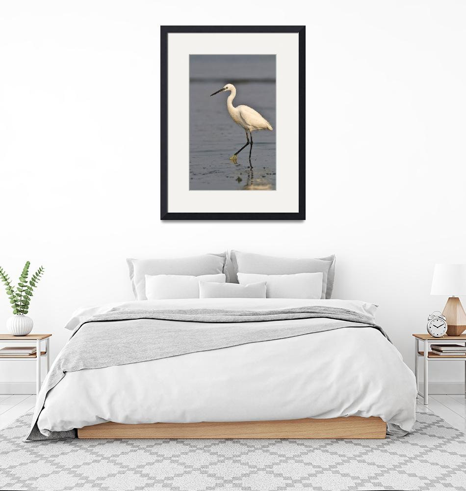 """""""Profile of a Little Egret""""  (2015) by SivamDesign"""