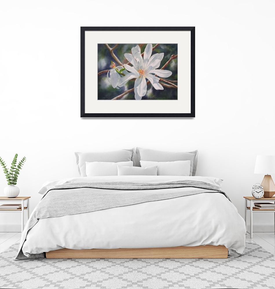 """Star Magnolia and Bud""  (2009) by Pacific-NW-Watercolors"