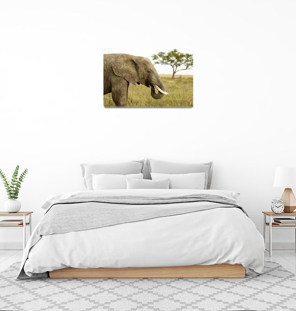 """Elephant and Umbrella Tree""  (2010) by BSpero"