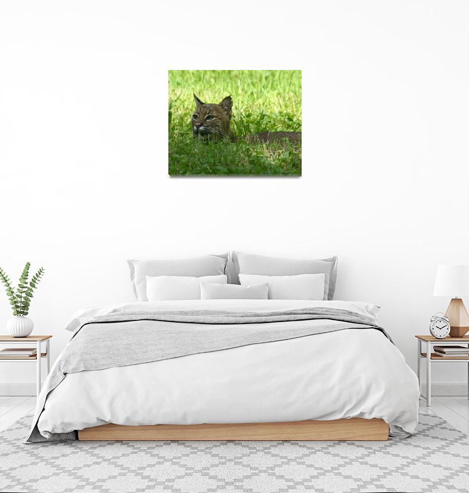 """""""Bobcat""""  by mikepolo"""